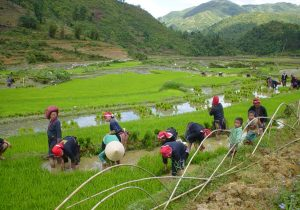 Sapa Off The Beaten Track 2 Days / 1 Night Tour by Express Bus