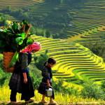 Black Hmong Group