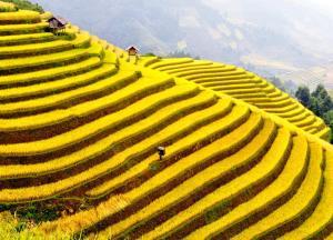 Sapa Experience - The Rice Terraces