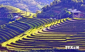 Sapa's terraced fields among world's most beautiful destinations