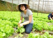 Farming tours attract many visitors to Da Lat city