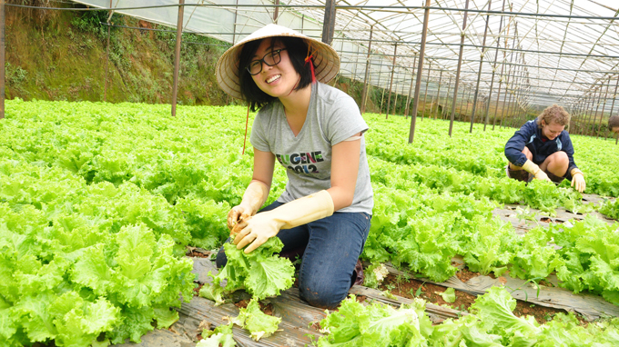 Farming tours attract many visitors to Da Lat city - Halong Sapa Packages