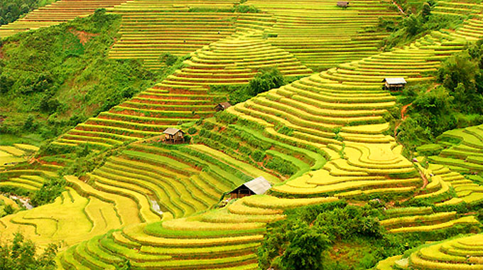 Viet Nam's terraced rice fields listed in the top 14 most surreal landscapes in the world