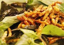 Bamboo worm, the unique food of Muong people in Thanh Hoa