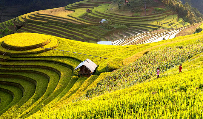cultural-week-honouring-mu-cang-chai-terraced-paddy-fields-opens