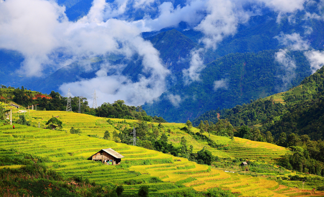 now-is-best-time-to-see-ripening-rice-fields-in-northern-vietnam